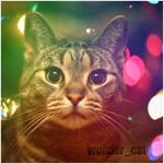 Рассылка whatapp - последнее сообщение от Wonder_cat